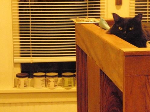 Black cat wathces painting progress
