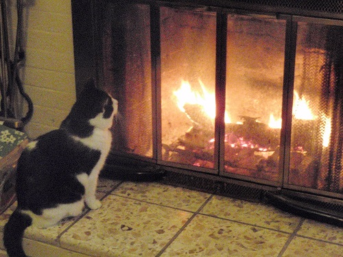 Black and white cat looking at fire