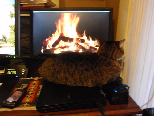 Tabby cat watching computerized fire