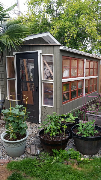 Small wood greenhouse with casement windows.